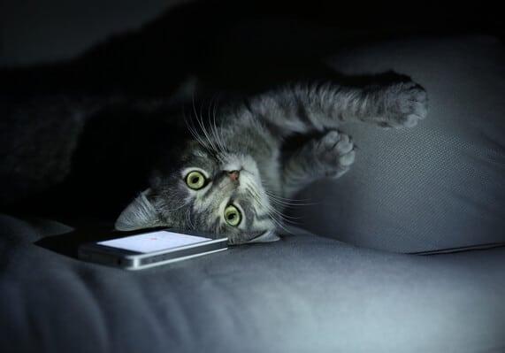 הידעת חתולים
