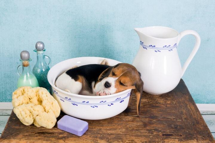 רחצת גורי כלבים